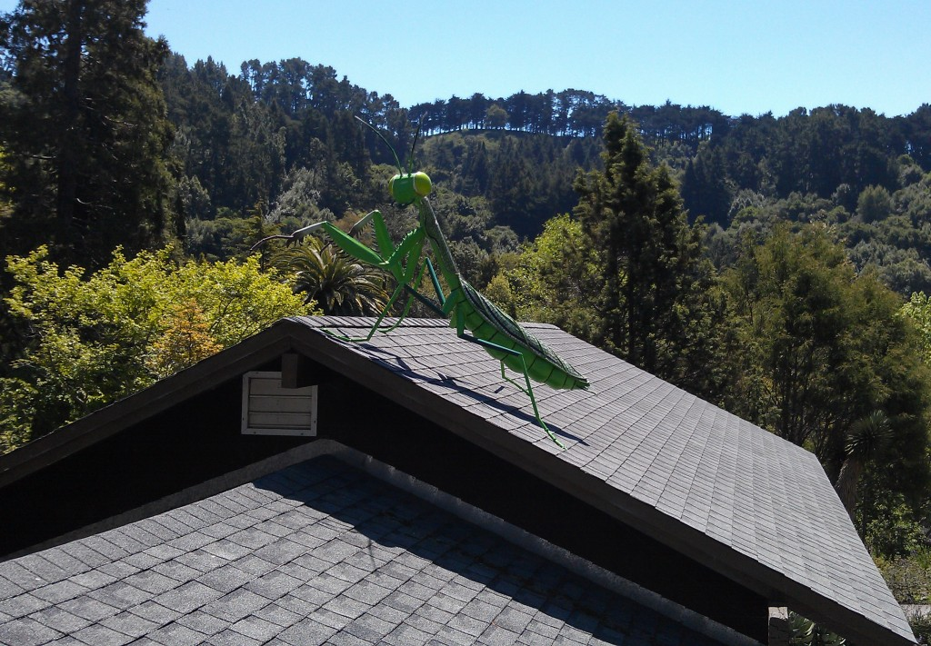 Praying Mantis on Roof