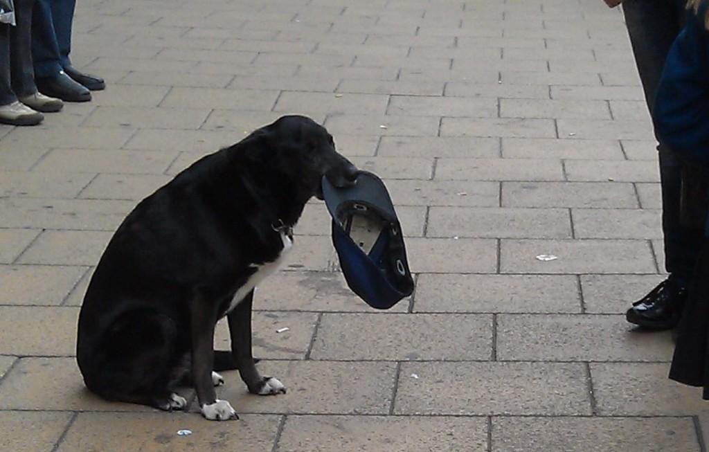 Photo of dog panhandling